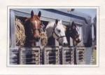 horses in trailer