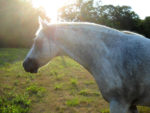 10 Tips for Keeping Your Horse Cool From Equus Magazine