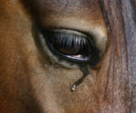 BEFORE YOU DONATE TO A HORSE RESCUE: READ THIS!