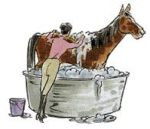 Can you use human shampoo on horses?