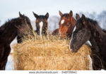 Is Your Horse's Hay Missing Key Nutrients?